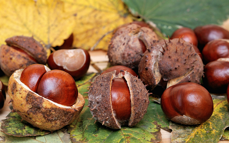 How to 'Conker' Health and Safety Myths